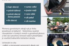 ryby-1